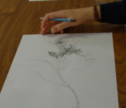 Beginners Drawing Class